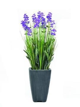 Lavender, purple, in pot, 45cm - 3 roky záruka, Ušetřete ihned 3% při registraci