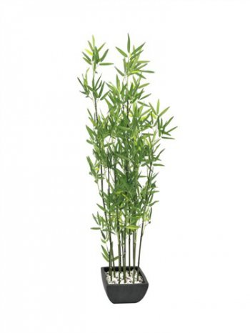 Bambus v černém květináči, 120 cm - 3 roky záruka