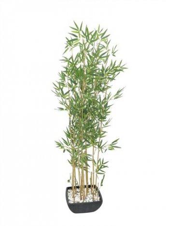 Bambus v černém květináči, 150 cm - 3 roky záruka