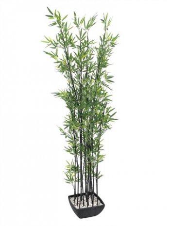 Bambus v černém květináči, 180 cm - 3 roky záruka