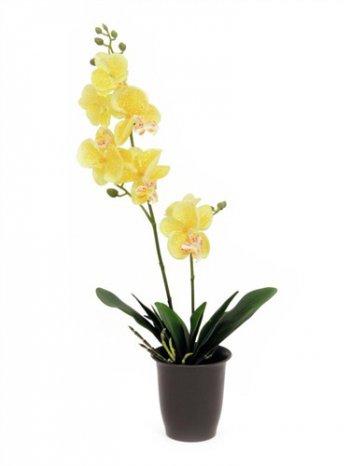 Orchidej žlutá, 57 cm - 3 roky záruka