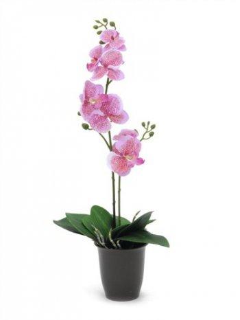 Orchidej růžová, 57 cm - 3 roky záruka