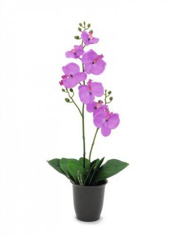 Orchidej nachová, 57 cm - 3 roky záruka