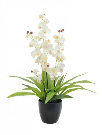 Orchidej bílá s listy, 80 cm - 3 roky záruka