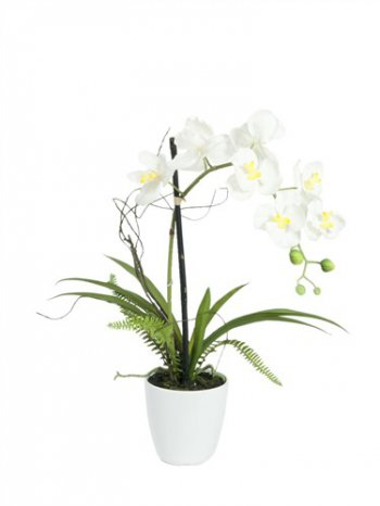 Orchidej bílá v dekoračním květináči, 8 kvítků, 62cm - 3 roky záruka