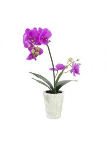 Orchidej fialová v dekoračním květináči, 6 kvítků, 56cm - 3 roky záruka
