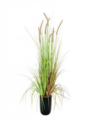 Vodní tráva v květináči - barvy podzimu, 120cm - 3 roky záruka